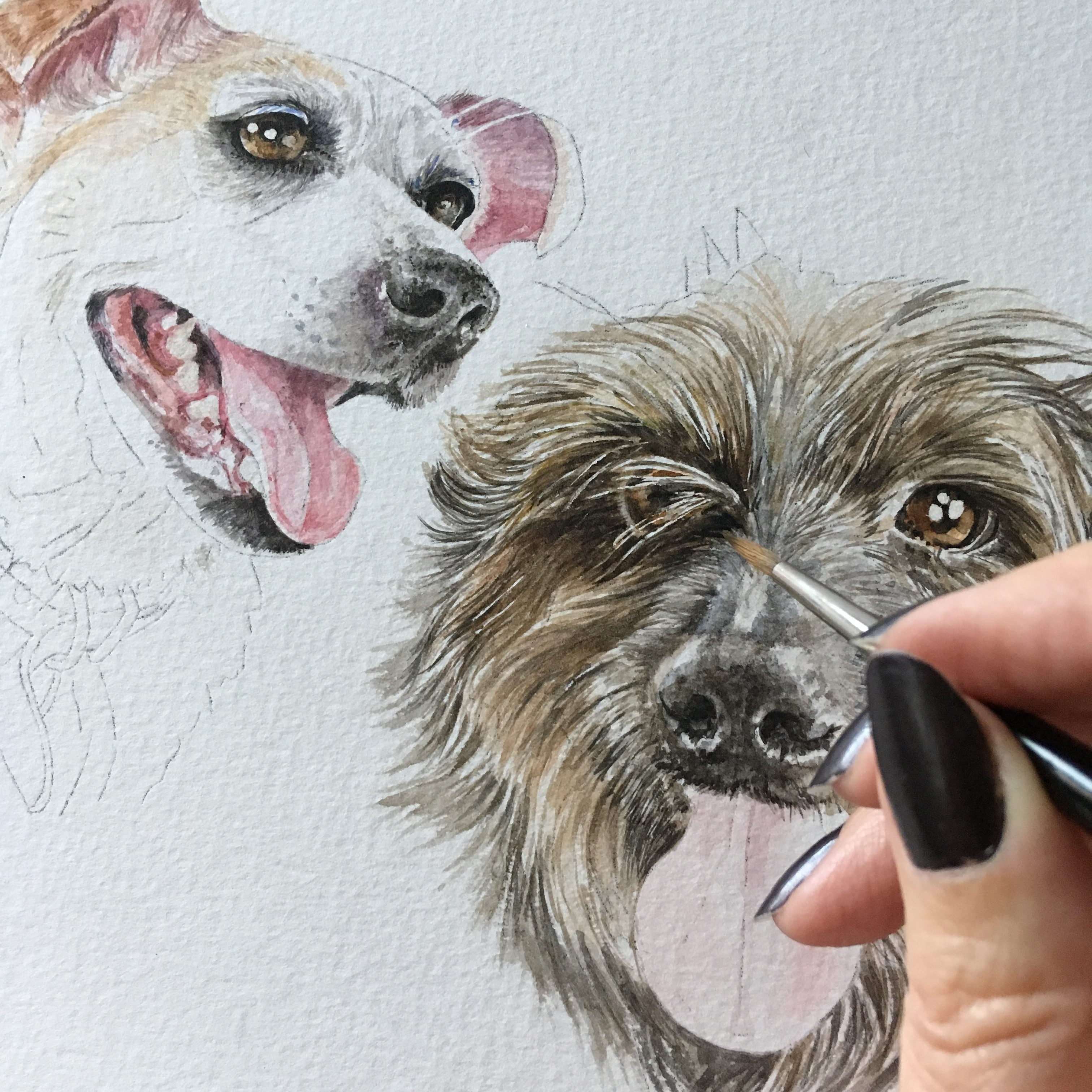 two dogs watercolour painting in progress