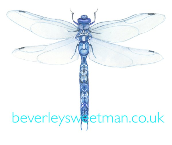 Blue dragonfly watercolour painting