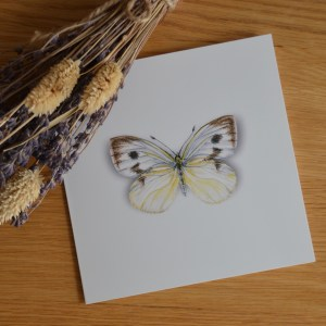 Cabbage white butterfly greetings card