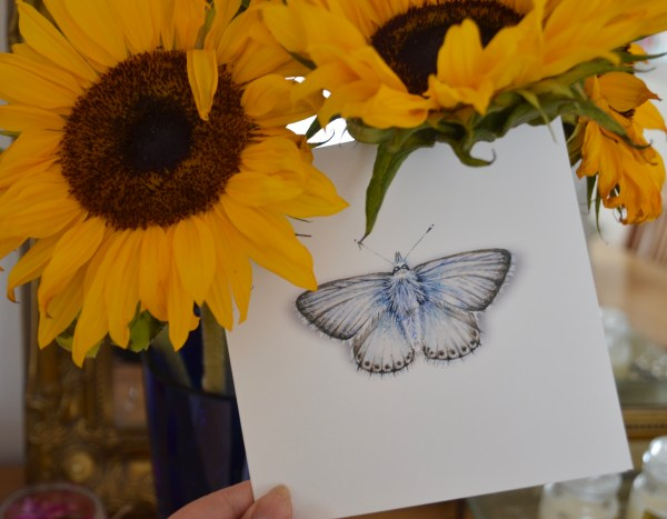 Chalk blue butterfly greetings card with sunflowers