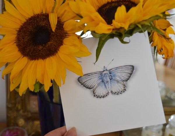 chalk-blue-butterfly-Card