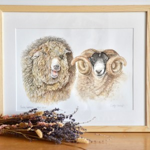 Rear Breed Sheep watercolour painting