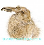 Hare watercolour painting called Beautiful