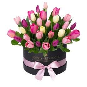 Tulips in 'Sweet Medley'