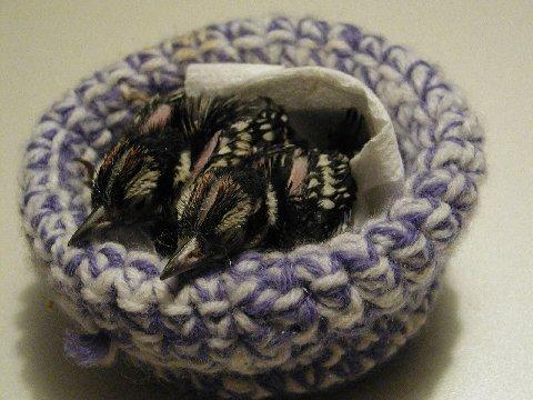 Image result for crochet bird nest