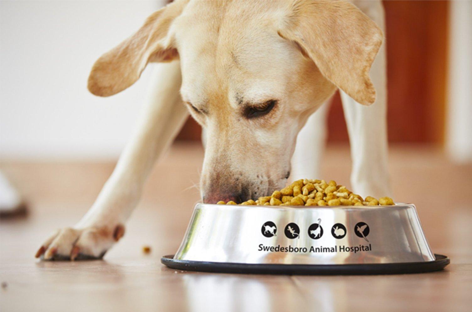 Swedesboro Animal Hospital Dog Dish