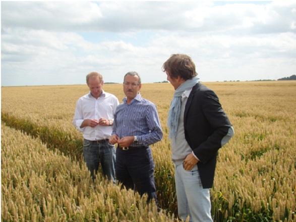 Grey Goose Wheat Fields