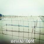 滋賀県・西の湖バスフィッシング (ボートポイント場所紹介)