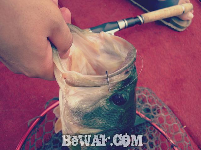 biwako nishinoko ibanaiko bass fishing guide chouka 12