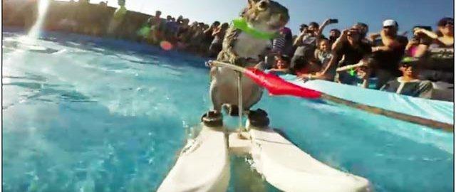 GoPro映像ペット部門ベスト作品!! 3