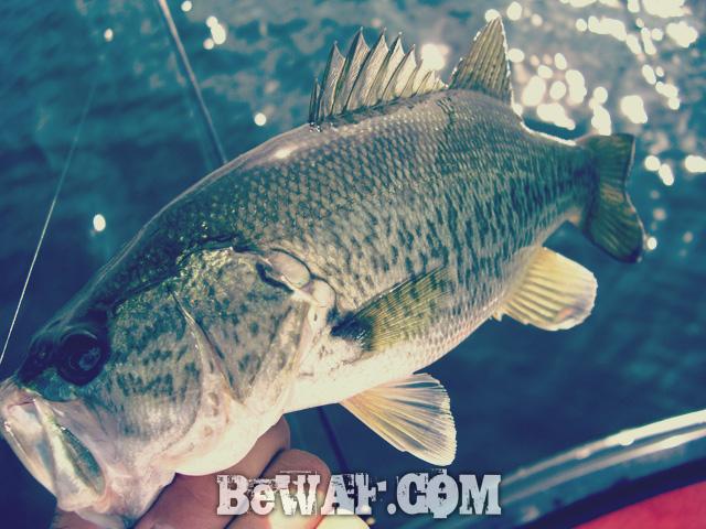 biwako bass fishing guide gekiyasu rental 12