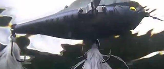 レイドジャパン ダッジ の水中映像