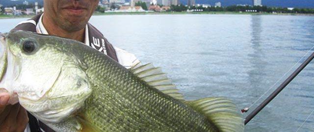 琵琶湖ライトリグ釣果 ガイド日記写真