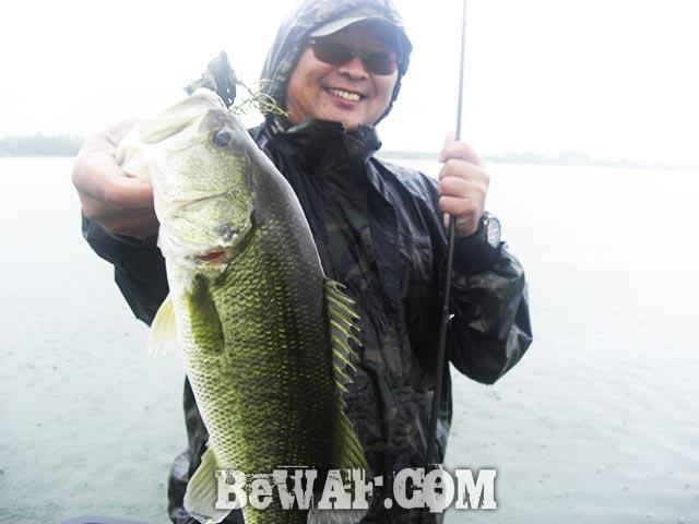 琵琶湖 スピナーベイト 釣果 ブログ写真
