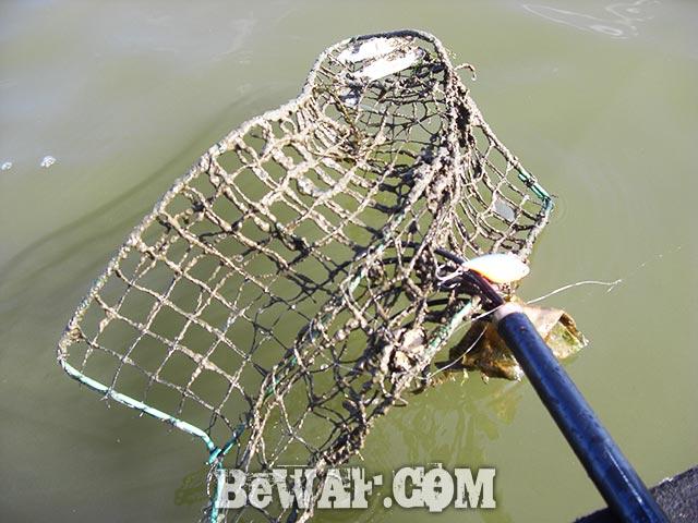 伊庭内湖 大会 バス釣り 結果写真