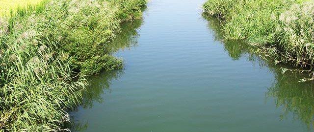 琵琶湖 内湖 おかっぱり 写真