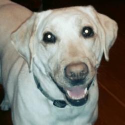 Leah dog headshot