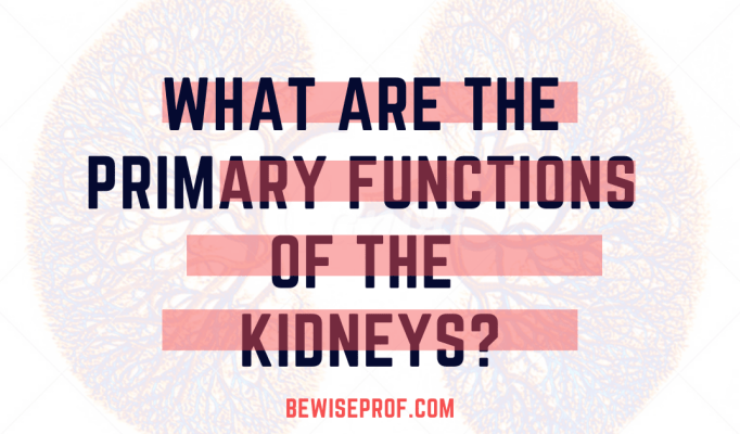 What Are the Primary Functions of the Kidneys