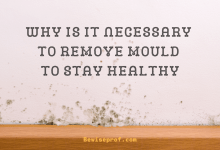Photo of Why Is It Necessary To Remove Mould To Stay Healthy