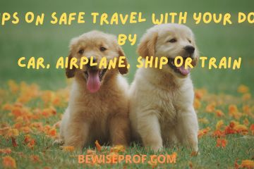 Tips On Safe Travel With Your Dog By Car, Airplane, Ship Or Train