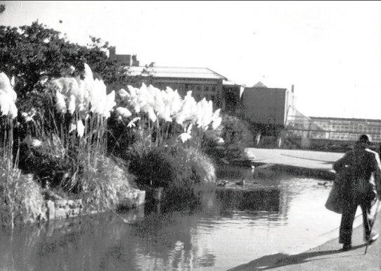 Egerton Park greenhouses c1950