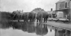 Little Common pond with Elephants 10.3.1931