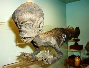 MUS-028 - Feejee Mermaid from Booth Museum 2011