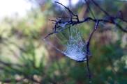 dew covered spider webs