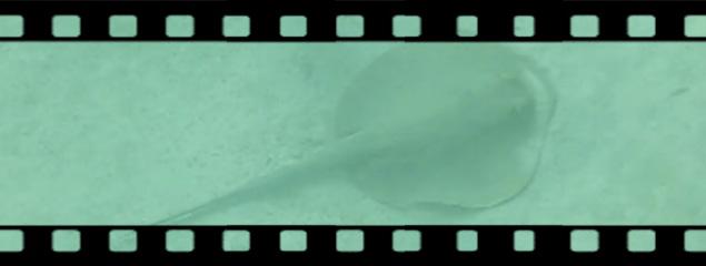 Blaupunktstechrochen im Roten Meer