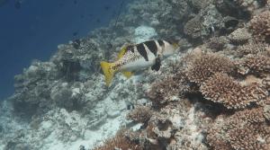 Manueller Weißagbleich unter Wasser