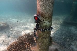 Zeitraffer unter Wasser