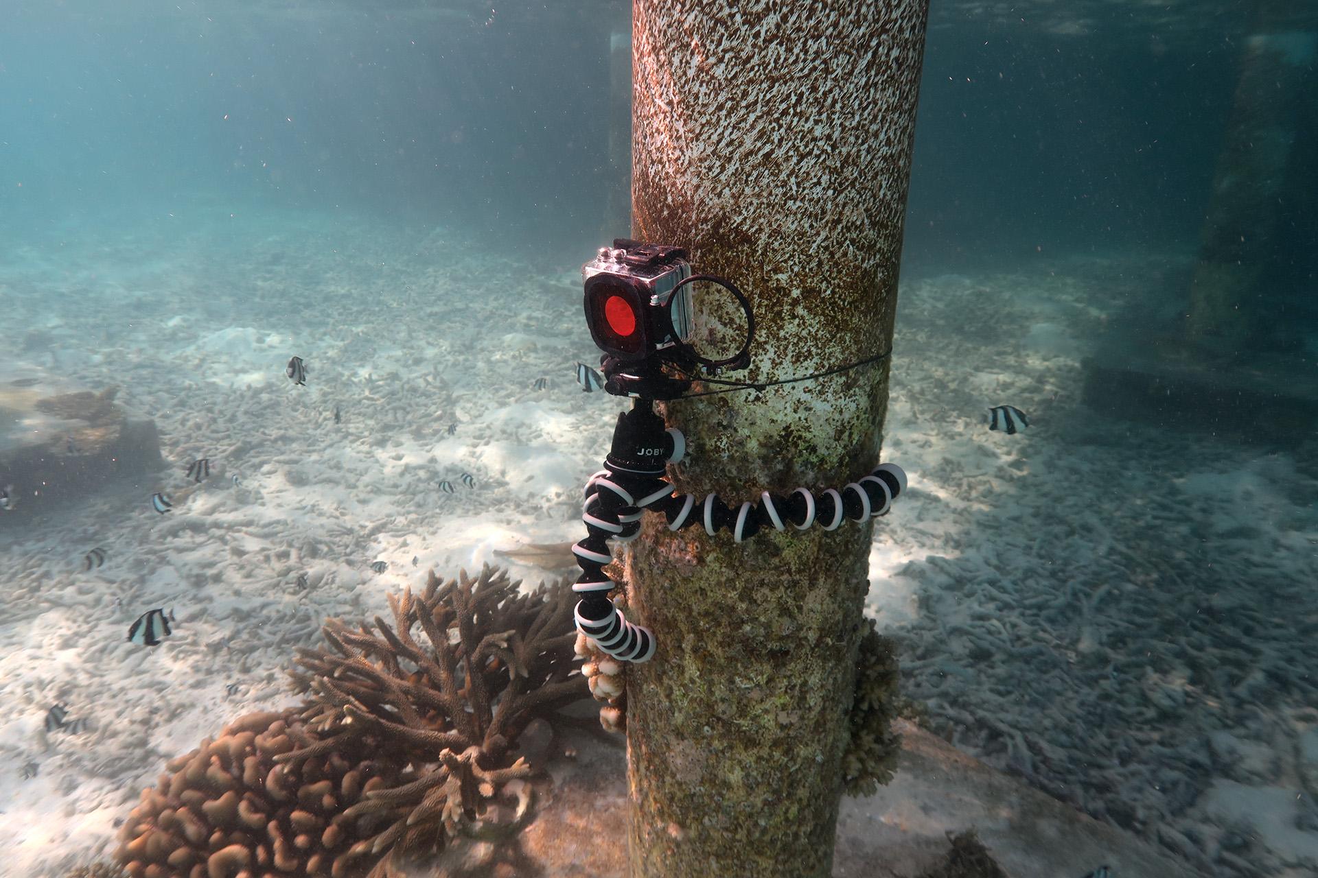 Zeitraffer unter Wasser - BLUEWAVEFILMS