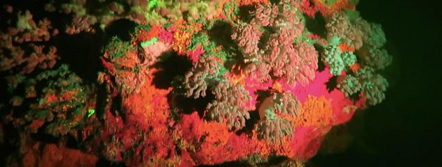 Fluodiving – Fluoreszenz unter Wasser