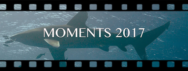 Diving Highlight 2017 – Beste Momente 2017