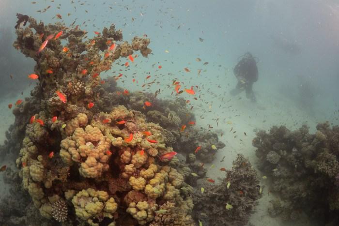 Weitwinkel unter Wasser - Fisheye - Tolle Farben unter Wasser