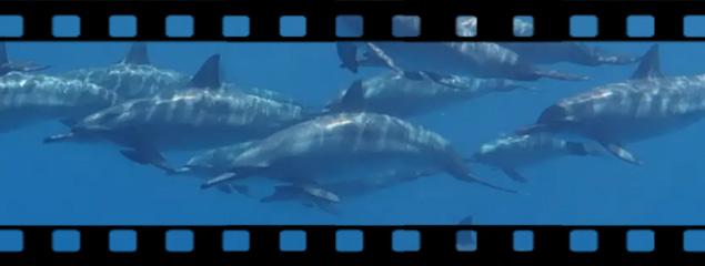 Neu: Scuba Simulator Film