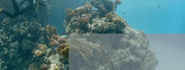 Log Video: Umfangreiche Farbkorrektur für Unterwasservideo