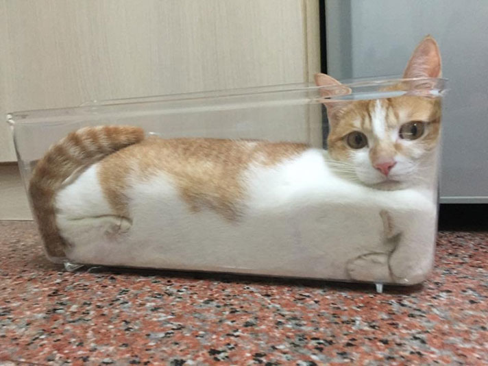Physicist Wins Ig Nobel Prize For Study On Whether Cats