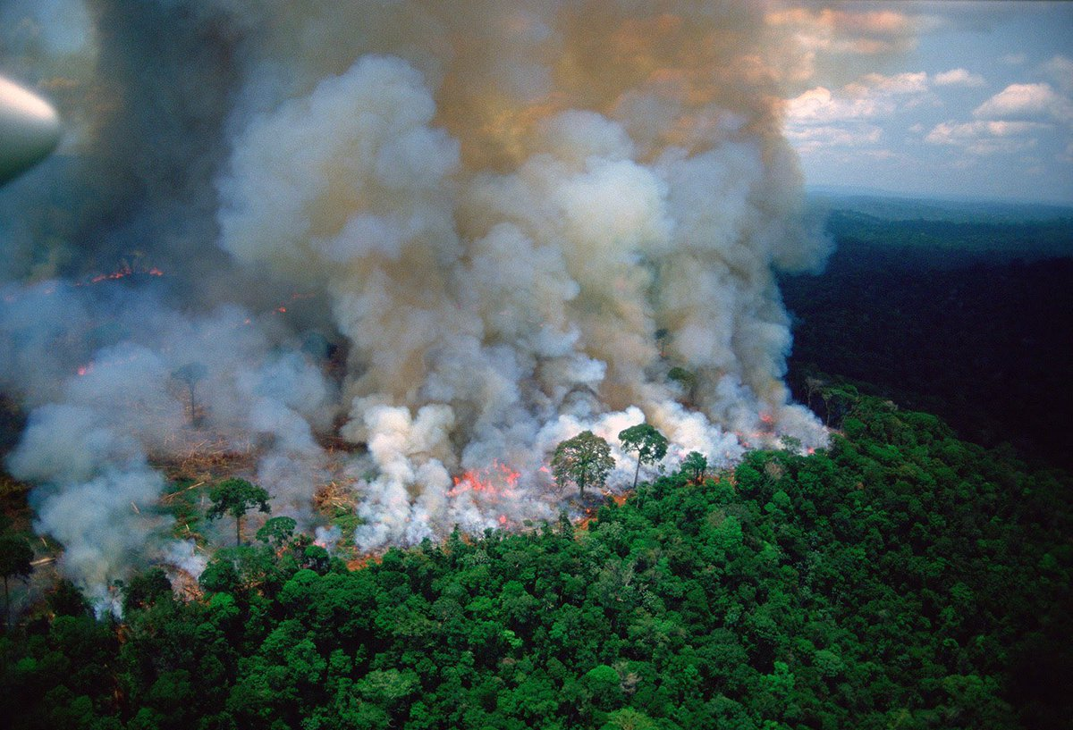 Image result for The Amazon Rainforest is on Fire and Hardly Anyone's Talking About It