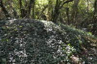 One of the mounds