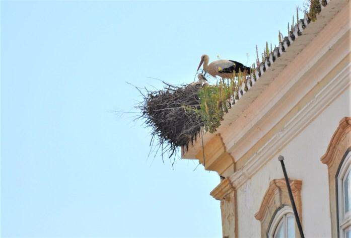 portugal nesting stork