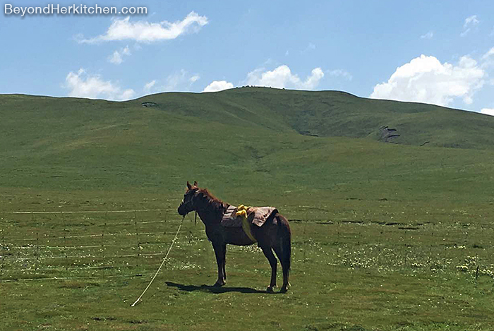 Tibetan horse, traditional transportation