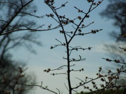 Twenty twirls of twigs1