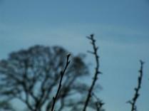 Twenty twirls of twigs5