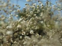 Mysticism & Flowerage 25