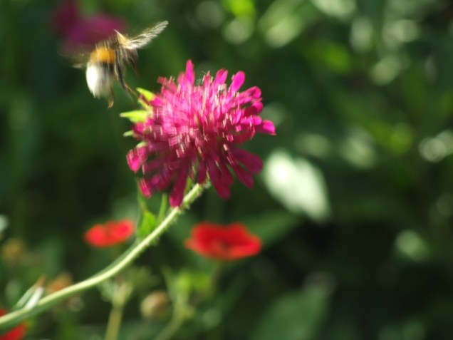 Mysticism & Flowerage 34