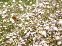 Mysticism & Flowerage 7
