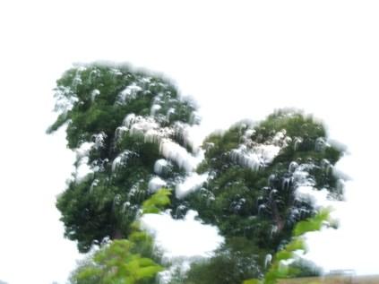 restless_trees_4
