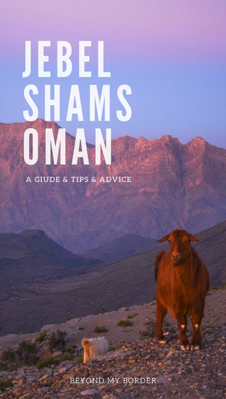 jebel-shams-oman-mountain-sunset-sheep