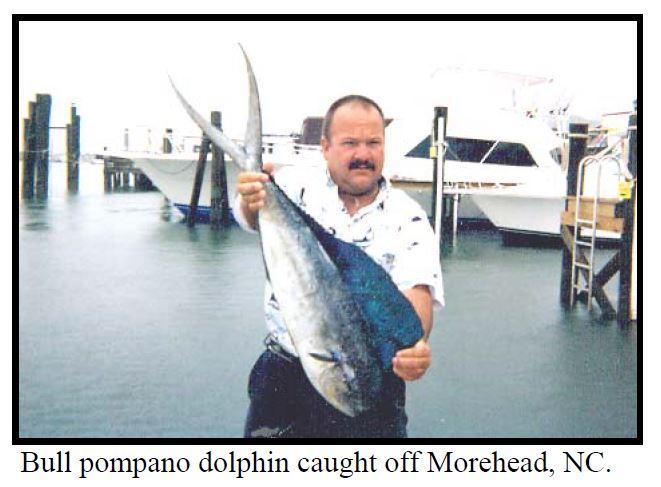 pompono dolphin